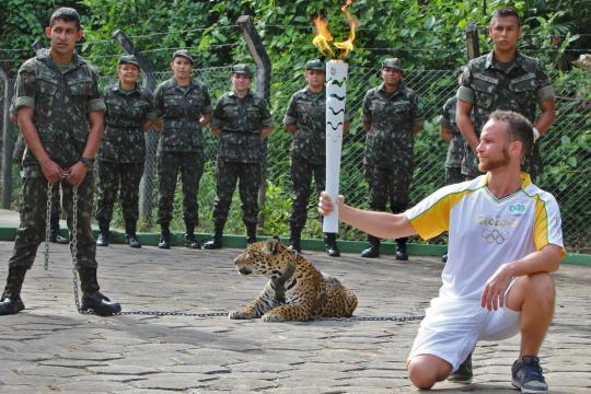 Jaguar griff Zuschauer an und wurdeerschossen.