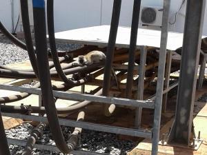 Diese Grünmeerkatze beschädigte einen Transformator und hüllte damit Kenia in Dunkelheit.